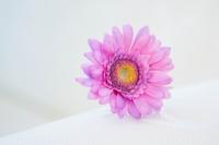 Egyszálas gerbera 45 cm-es rózsaszín