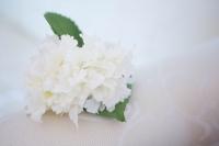Mini fehér hortenzia