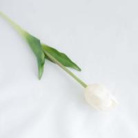 Szálas tulipán fehér