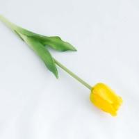 Szálas tulipán sárga