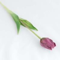 Szálas tulipán lila