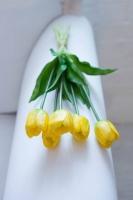 Tulipán csokorban 40cm sárga 5 szál