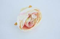 Peoniafej 8x6cm krém-rózsaszín cirmos