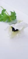 Szellőrózsa 37cm fehér