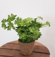 Cserepes zöld 20cm 9.