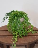 Cserepes zöld 20cm 10.