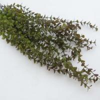 Zöld futó növény 65cm őszi színben